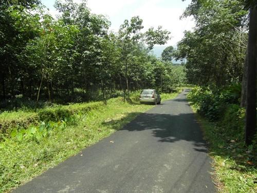 rubber price in kerala kottayam