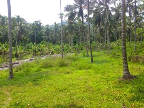 4 Acre Land for sale at Peruvannamuzhi, Perambra,Kozhikode