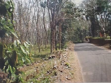 Prime Land For Sale At Karikkattoor Manimala Kottayam