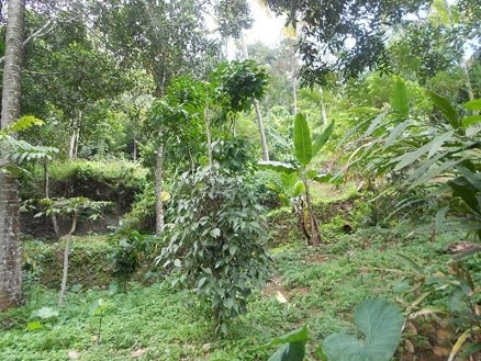 Low Rate Agricultural Land for sale Near Munnar - Kerala
