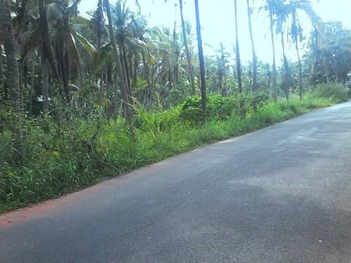 35 Cents of land for sale at Cheruvathur,Kazargod  - Kerala