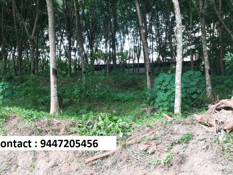 1 5 acre land for sale - Kerala Real Estate
