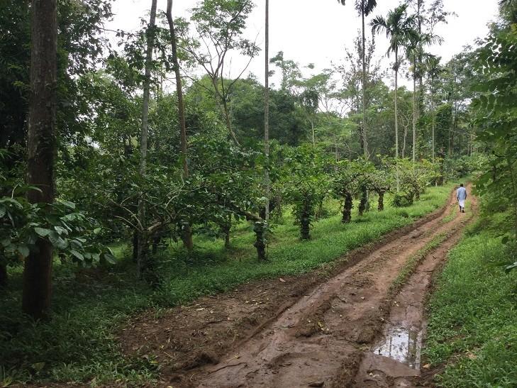 6 ACRES OF PLANTATION FOR SALE AT MEENANGADI,WAYANAD ...