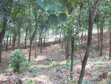 3 Acres of Square Residential Plot with Tar road frontage for sale at Cherupuzha,Kannur.