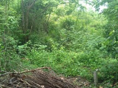 65 cent rectangular land.  Location: karimkulangara, athipotta, alathur, palakkad