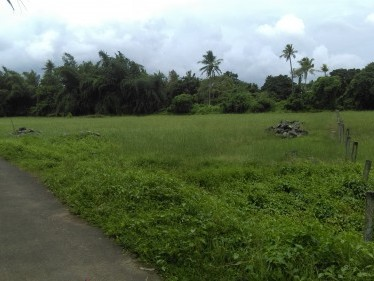 1.3 Acres of land for sale at Athani,Nedumbassery,Ernakulam District.