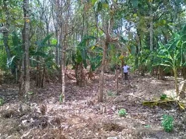 32 Cent Residential Land for sale at Kottarakkara,Kollam.