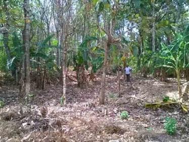 32 Cent Residential Land for sale at Kottarakkara,Kollam.