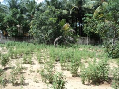 10 Cent Land for sale Near Kinfra Park,Menamkulam,Kazhakoottam,Thiruvananthapuram.