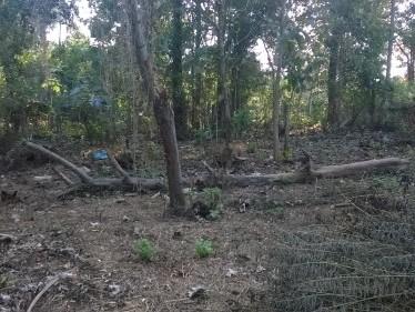 Urgent Land For Sale In Alathur