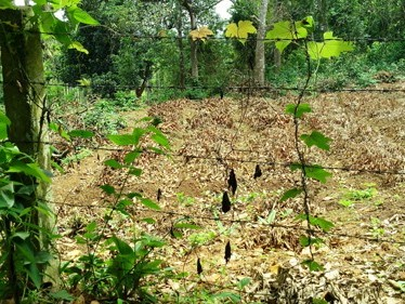 25 Cents of Land for sale on the main Mananthavady-Tellicherry road near Govt Engineering College, M