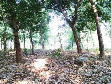 7 Acre Coconut Farm Land for sale at Alathur,Palakkad