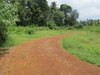 110 Cent land with old House as well as plenty of coconut trees, one pond sufficient water and plent