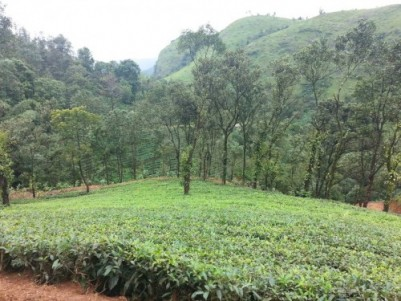 12 Acres of Land for sale at Vagamon, Idukki