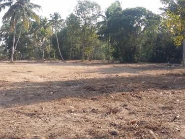 Flat 1.9 acre residential land near Kayamkulam, Kerala