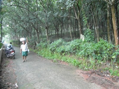 160 Cent land for sale at Unnamattom,Kottayam