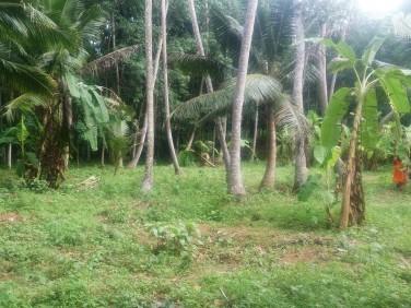 42cents of Square plot situated near Chenkavila, parassala