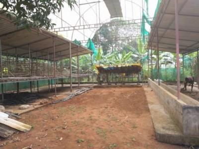 Farm in Thrissur (Thiruvilwamala) - 110 cents