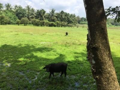 കൃഷിക്ക് അനുയോജ്യമായ ഭൂമി 2.20 acr Agricultural Land