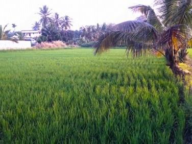 Land for Sale at  Alathur, Palakkad