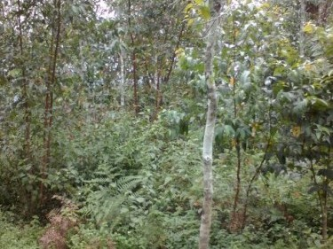 50 Cents of land for sale at Rajakumari,Idukki.
