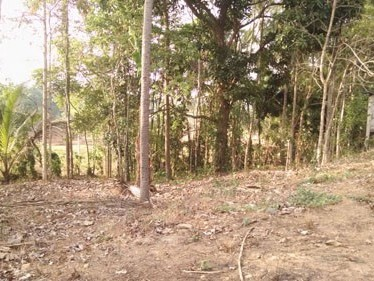50 Cent Good Commercial Cum Residential Land for sale at  Palakkad - Ponnani Highway.