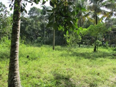 78 Cents of Land for sale at Panavally,Cherthala,Alappuzha District.