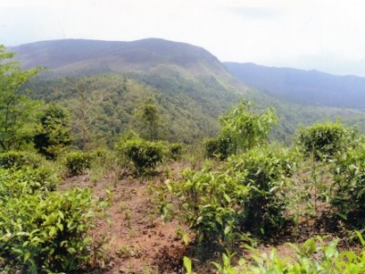 land for sale at vagamon