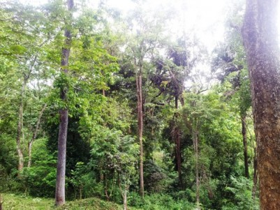 90 Cents of Forest Boundary Property for sale at Irulam,Pulpally,Wayanad.