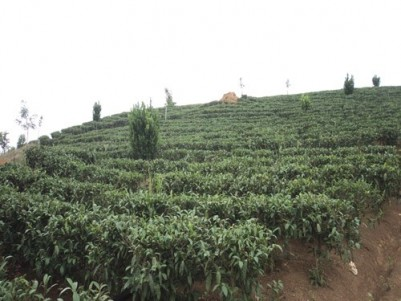 10 Acre Tea Plantation with Bungalow for sale at Santhanpara, Near Munnar, Idukki