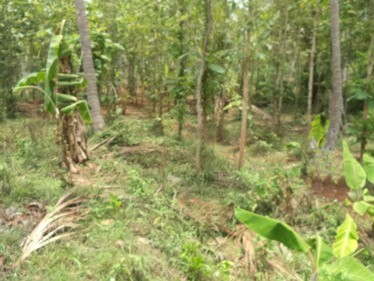 29 Cents of Residential Land for sale at Pathiripala,Palakkad.