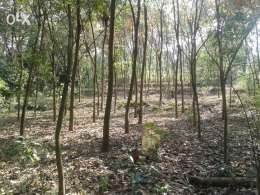 50 cent Plot for sale in Ayroor