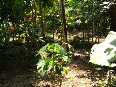 13.250 cents of Residential land for sale @Mannantala Trivandrum