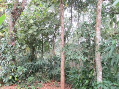 60 Cent Land with House for Sale at Kottarakkara, Kollam