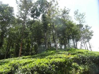 2.75 Acres of Tea plantation with a Resort for sale at Vagamon, Idukki.