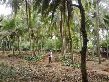 Residential Plot for Sale at Pathiripala, Palakkad