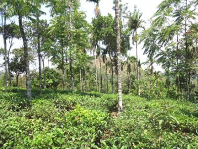 1.5 Acres of Land with Homestay for sale at Vagamon, Idukki