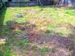 5 Cent Land for Rent/Lease at Palluruthy