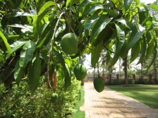 4 Acres of Plantation with House for sale at Ayroor,Pathanamthitta.