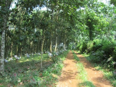 7.27 Acres of Rubber Plantation with 2500 Sqft 4 BHK House for sale at Pazhayidom,Kottayam.