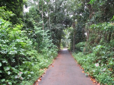 Beautiful Rectangle Plot for sale Near Cochin Air Port, Mookkannoor,Angamaly,Ernakulam.