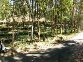 Arayum Nilayum Ulla Veedum in Beautiful 5.25 Acre Rubber plantation and More
