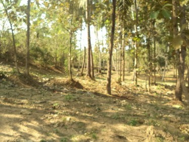 1.5 Acres of Residential Land for sale at Ottapalam ,Palakkad.