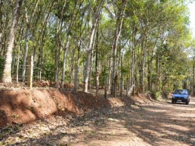 1.10 Acre Rubber Plantaition for Sale at Nenmenikunnu,Sulthan Bathery,Wayanad.