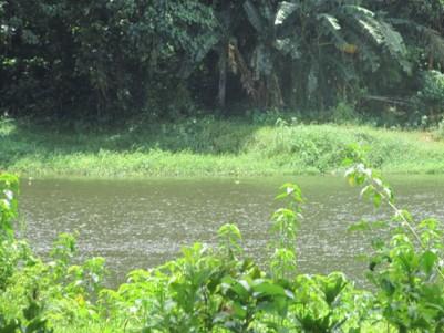 4 Acres Original land with150 feet River frontage Mavelikkara, Alappuzha.