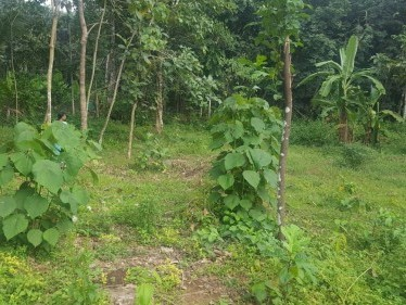 20 Cents Residential Plot for Sale