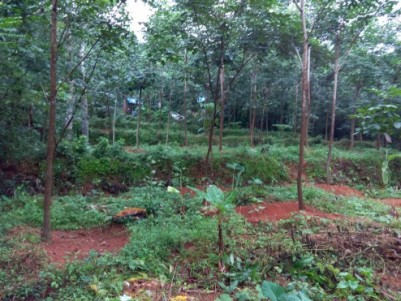 75 cent land with 237 rubbers, Plot for agriculture and making House