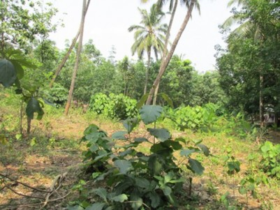 1 acre land for sale at Mulayam near Mannuthy, Thrissur.