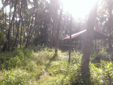 160 Cent Land with 4 BHK Old House for sale at Kandassankadavu,Thrissur.