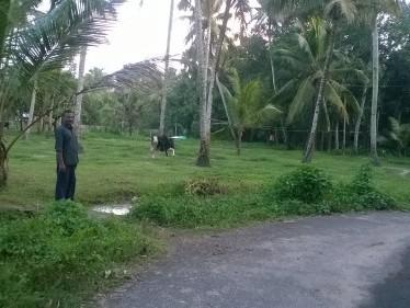 plot for sale near karunagappally kollam